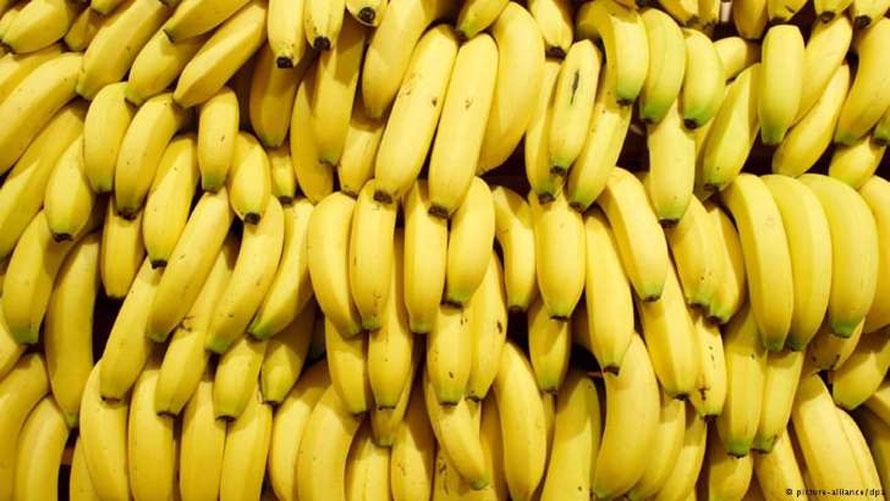 banana_nanica